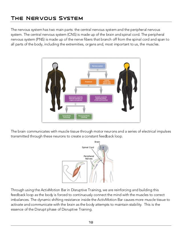 Hypothalamus Human Brain Series Part 17 Manual Guide