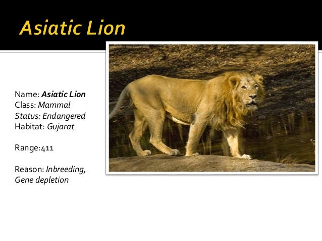 indian-endangered-species-with-names
