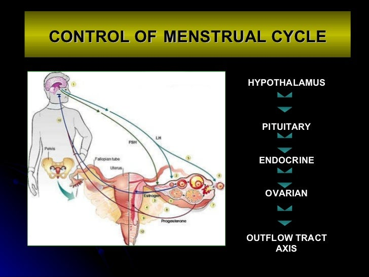 CONTROL OF   MENSTRUAL CYCLE HYPOTHALAMUS PITUITARY ENDOCRINE OVARIAN OUTFLOW TRACT AXIS