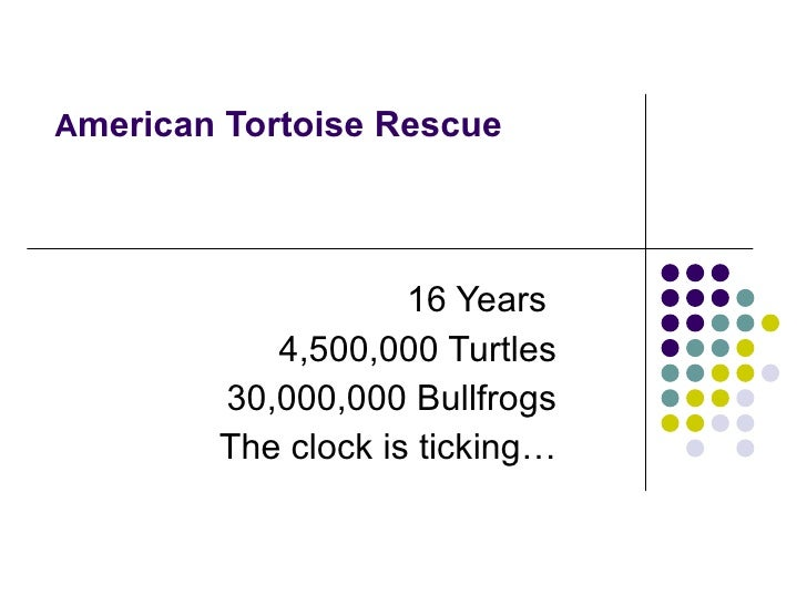 A merican Tortoise Rescue  16 Years  4,500,000 Turtles 30,000,000 Bullfrogs The clock is ticking…