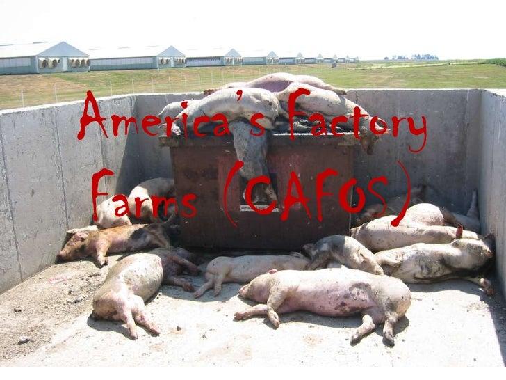 America's Factory Farms (CAFOS)<br />