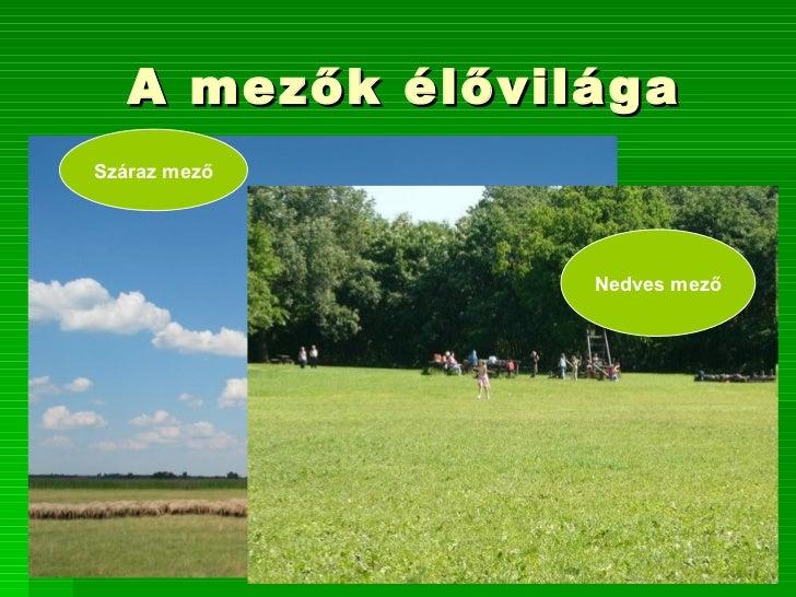 A mezők élővilágaSzáraz mező                 Nedves mező