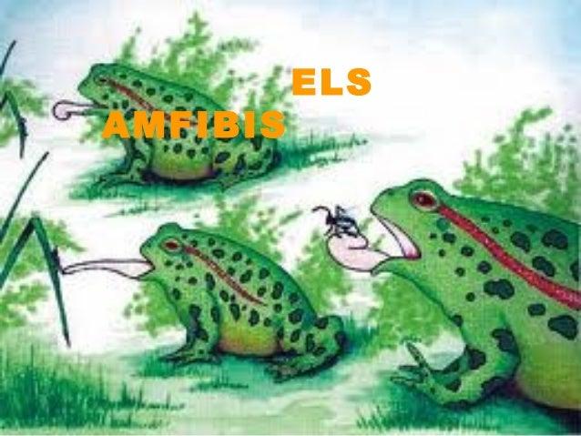 ELS AMFIBIS