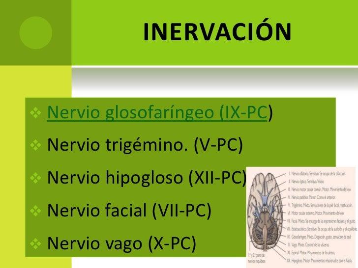 Amigdalectomia 1 Slide 3