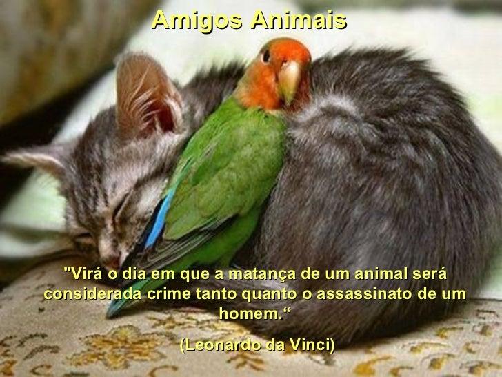 """Amigos Animais  """"Virá o dia em que a matança de um animal seráconsiderada crime tanto quanto o assassinato de um          ..."""
