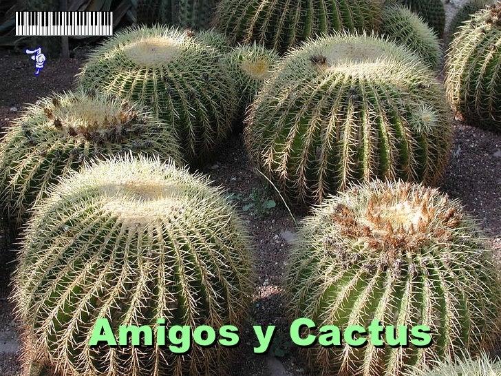 Amigos y Cactus