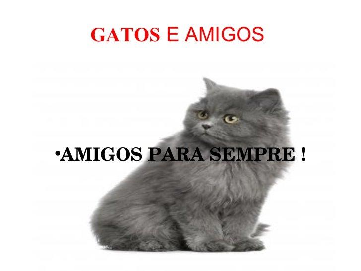 GATOS  E AMIGOS  <ul><li>AMIGOS PARA SEMPRE ! </li></ul>