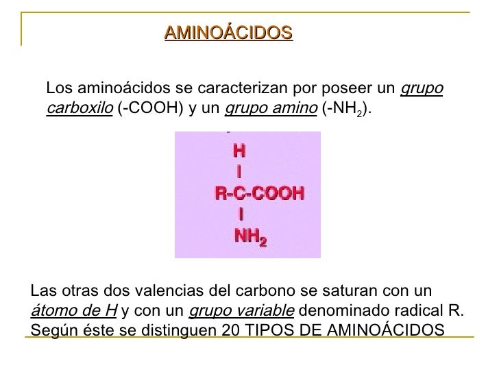 Los aminoácidos se caracterizan por poseer un  grupo carboxilo  (-COOH) y un  grupo amino  (-NH 2 ). Las otras dos valenci...