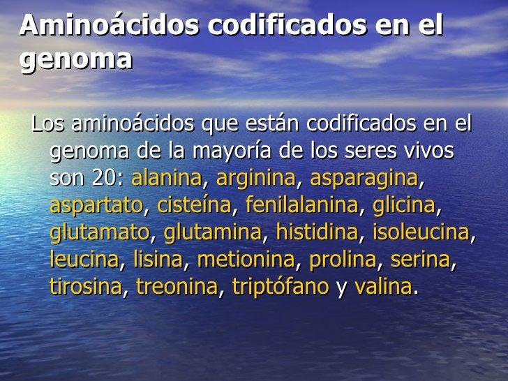 Aminoácidos codificados en elgenomaLos aminoácidos que están codificados en el  genoma de la mayoría de los seres vivos  s...
