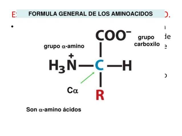 Aminoacidos Slide 3