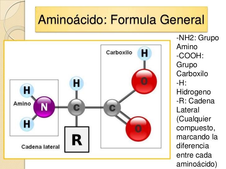 Aminoácido: Formula General                      -NH2: Grupo                      Amino                      -COOH:       ...