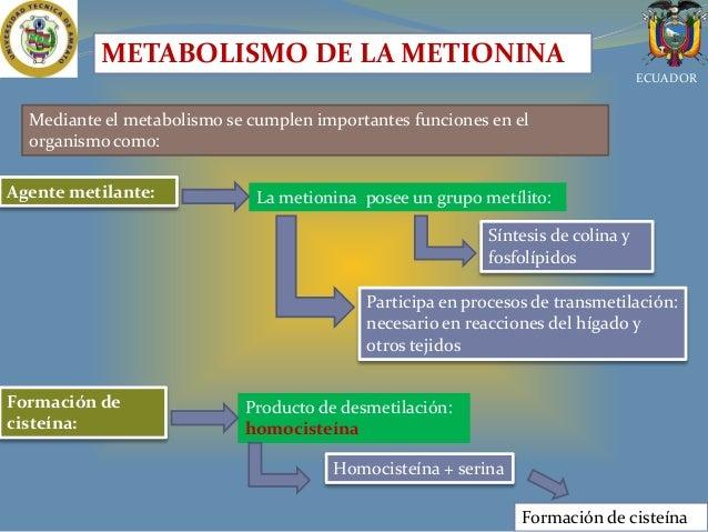 Aminoacidos En La Alimentación Animal