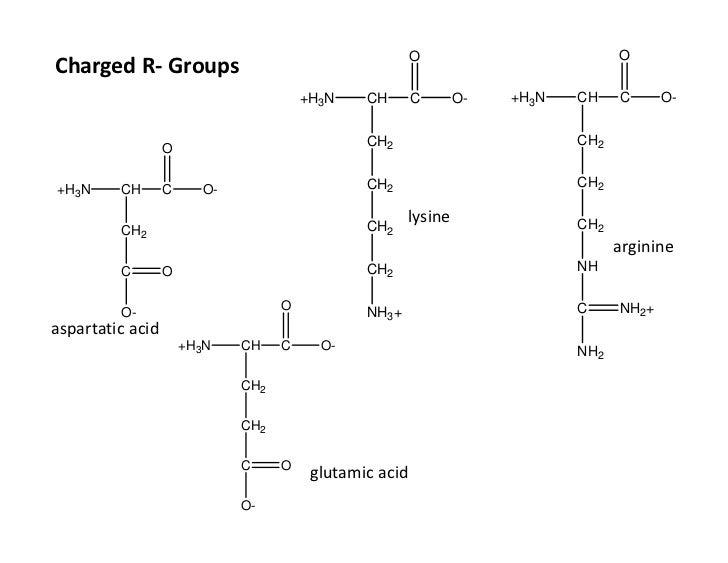 R Glutamic Acid Structure Amino acids