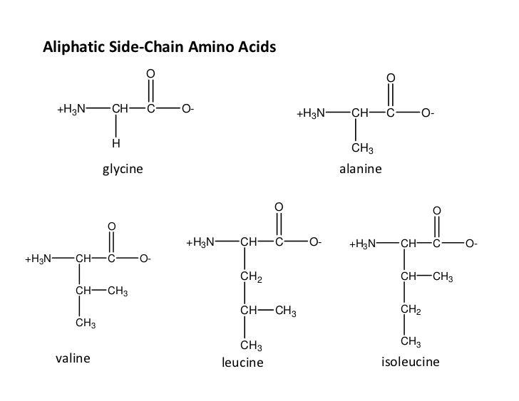 amino acid side chains