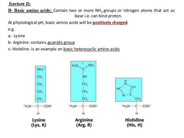 Amino acids basic heterocyclic amino acids 15 c acidic thecheapjerseys Gallery