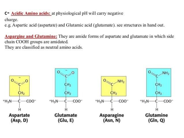 Aspartate Amino Acid
