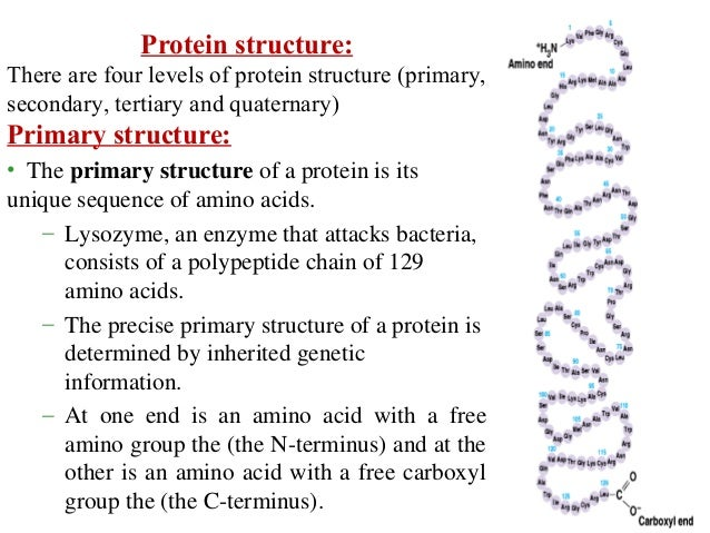 Amino Acids And Protein