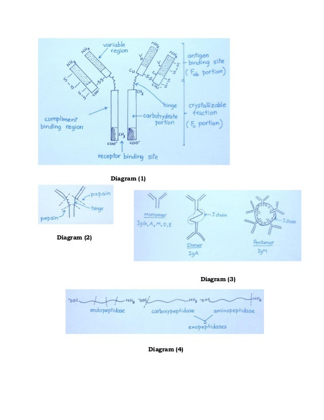 amino acids and proteins pdf