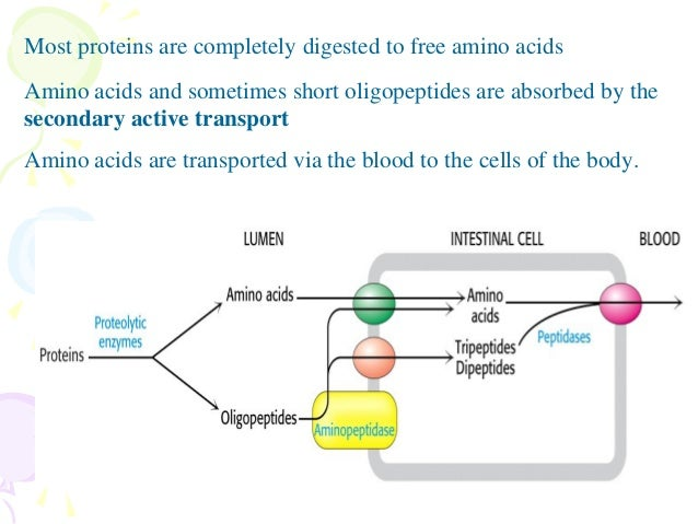 synthesis of lipids and steroids