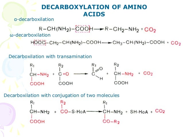 Amino Acids Metabolism New 12281450