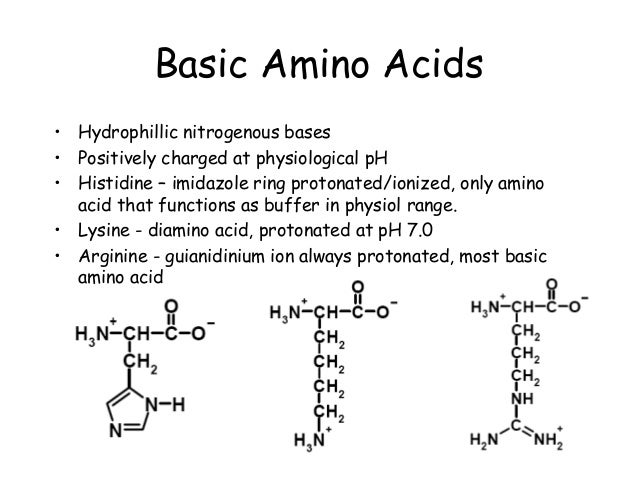 Chapter 3part1 amino acids peptides and proteins basic amino acids altavistaventures Images