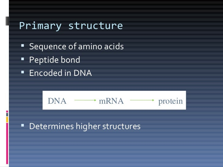how primary structure determines protein function The structure of protein sets the foundation for its interaction with other molecules in the body and, therefore, determines its function this article will cover the.