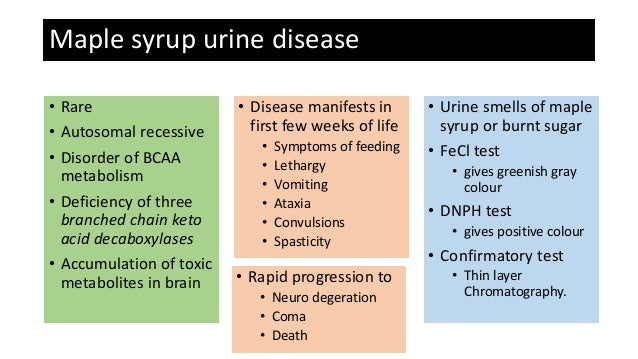 maple sugar urine disease