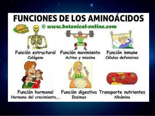 Aminoácidos esenciales Aminoácidos no esenciales Aminoácidos condicionales
