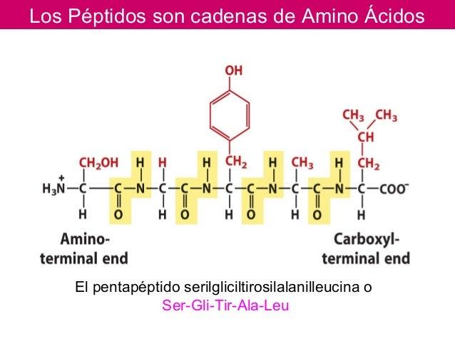 Peptido con 12 amino acidos para adelgazar