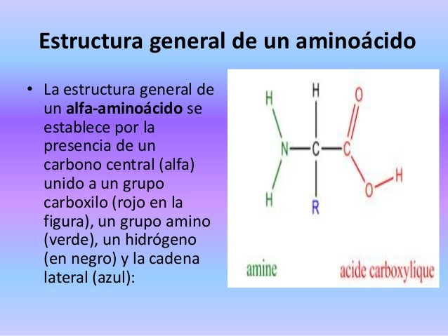 Aminoácidos Y Acidos Nucleicos Por Jessica Carrillo