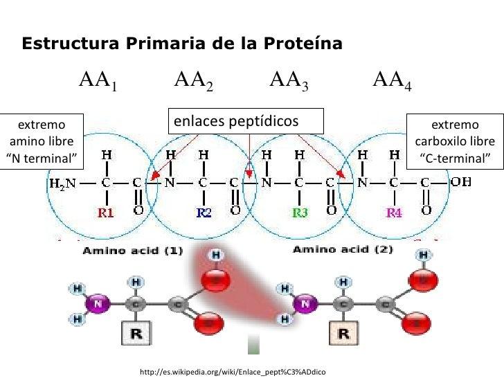 Aminoácidos Y Estructura Primaria De Las Proteínas