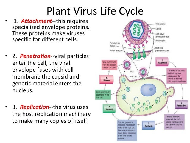 viral diseases in plants pdf
