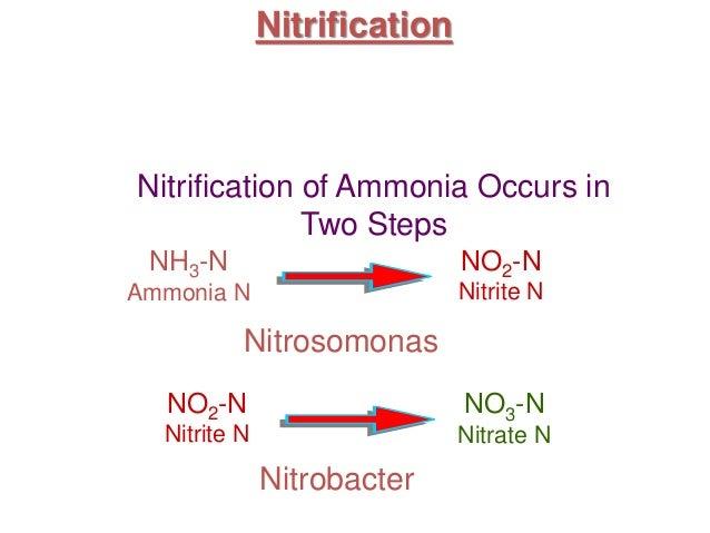 Nitrification and Treatment Plants Nitrogen Fixation Cycle