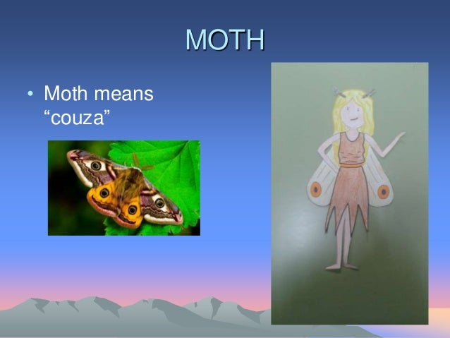 """MOTH • Moth means """"couza"""""""