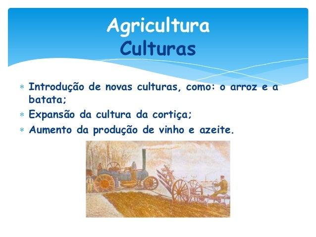 Agricultura Culturas Introdução de novas culturas, como: o arroz e a batata; Expansão da cultura da cortiça; Aumento da pr...