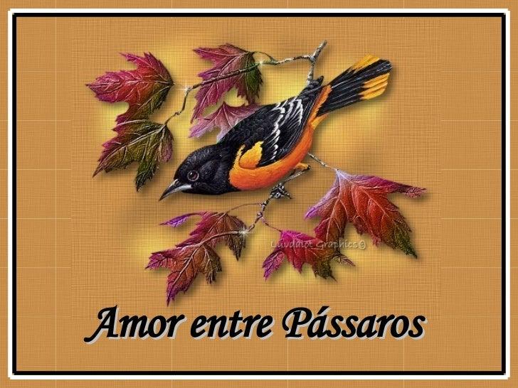 Amor entre Pássaros