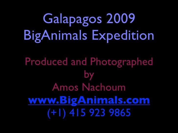 Galapagos 2009 BigAnimals Expedition Produced and Photographed             by      Amos Nachoum  www.BigAnimals.com     (+...