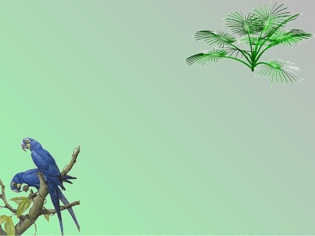 Un jour, un oiseau femelle de la famille desperroquets, soit un cockatoo australien, afrappé le pare-brise d'une auto et s...
