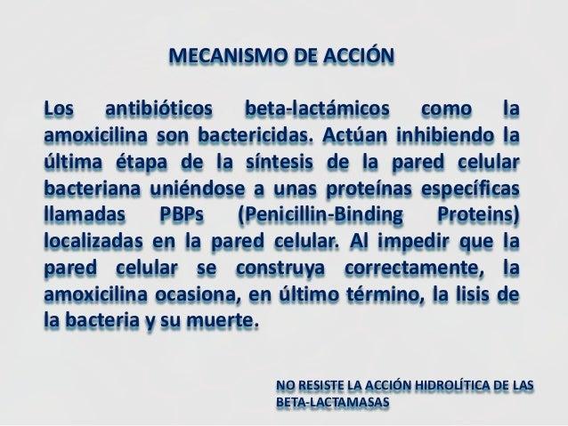 Peptostreptococcus