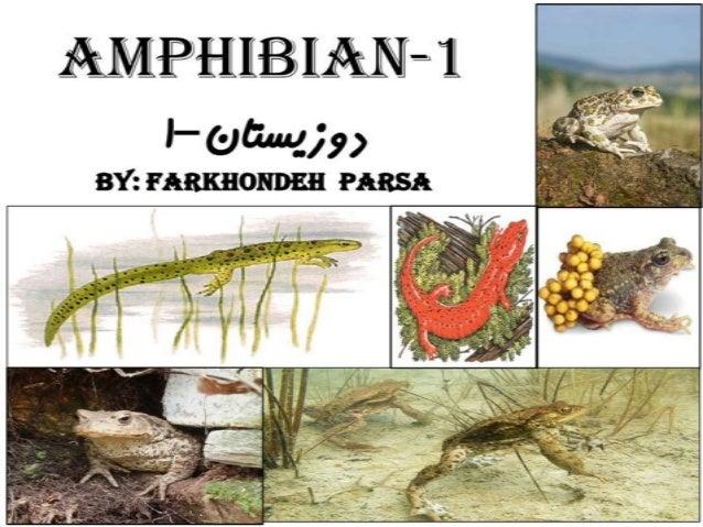 Amphibian 1