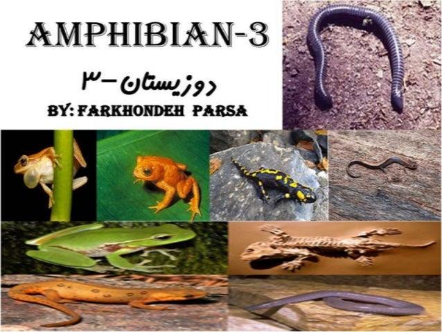 Amphibian 3