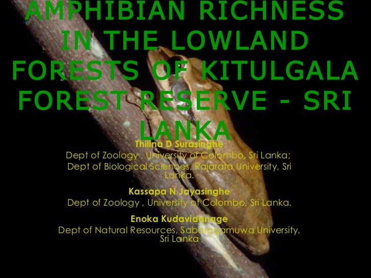 AMPHIBIAN RICHNESS IN THE LOWLAND FORESTS OF KITULGALA FOREST RESERVE - SRI LANKA Thilina D Surasinghe Dept of Zoology , U...