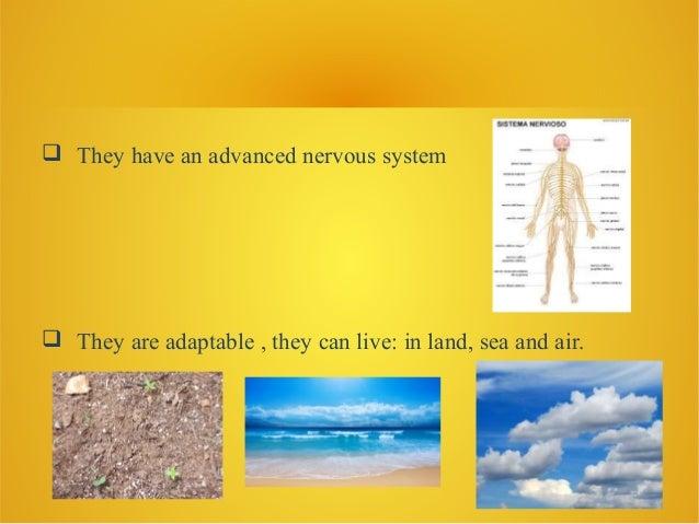 Amphibians.d (1) Slide 3