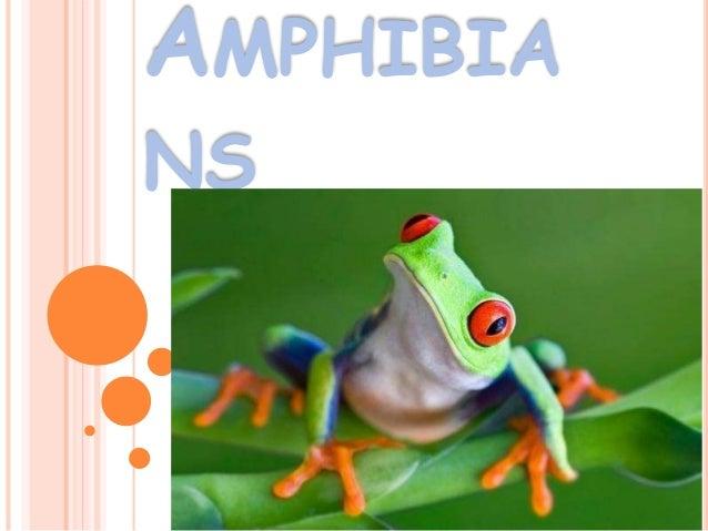 AMPHIBIA NS