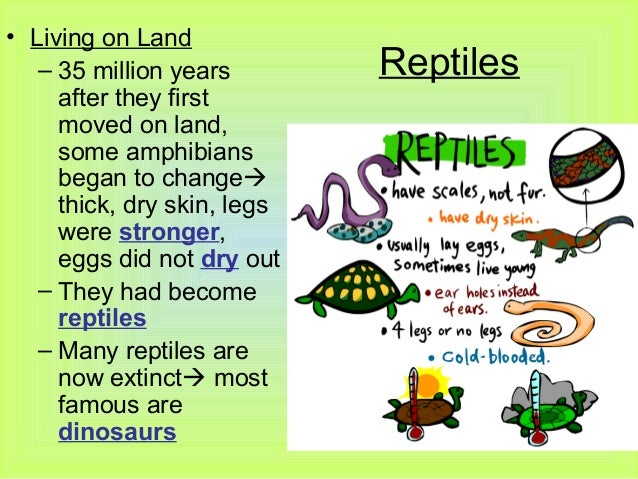 amphibian worksheet