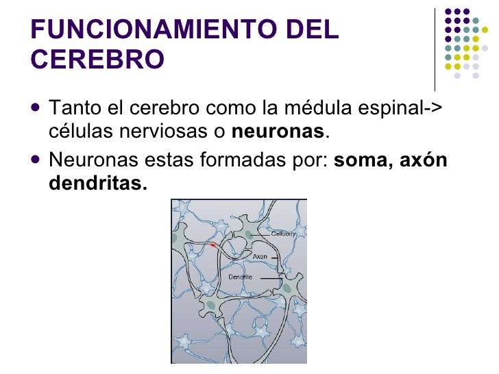 FUNCIONAMIENTO DEL CEREBRO <ul><li>Tanto el cerebro como la médula espinal-> células nerviosas o  neuronas . </li></ul><ul...