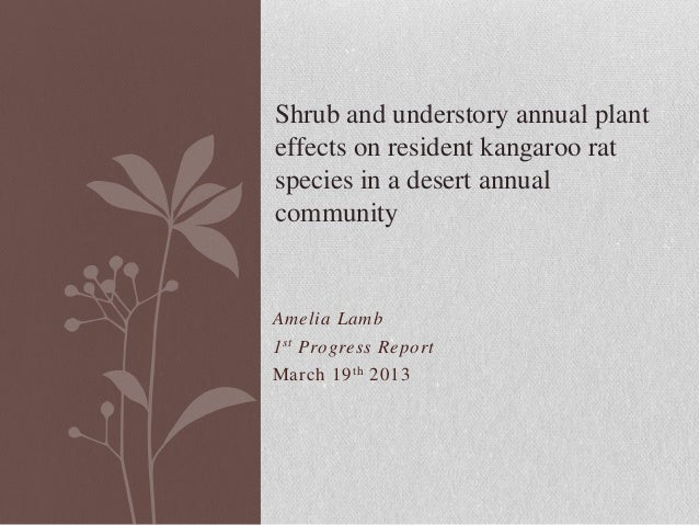 Amelia Lamb 1st Progress Report March 19th 2013 Shrub and understory annual plant effects on resident kangaroo rat species...