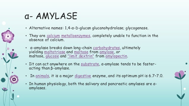 Amylase Enzyme Sources Its Applications