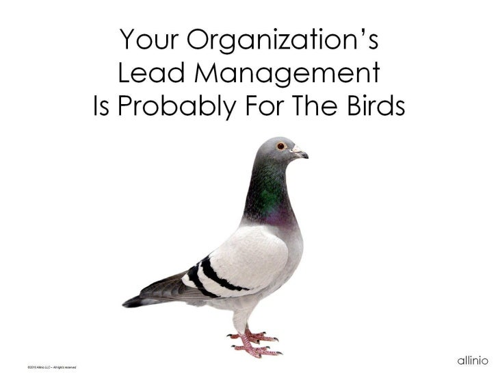 Your Organization's                                              Lead Management                                          ...