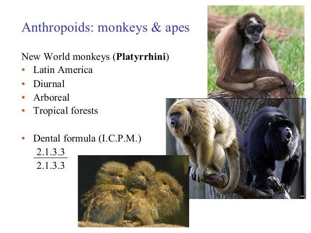 Old World monkey - Wikipedia